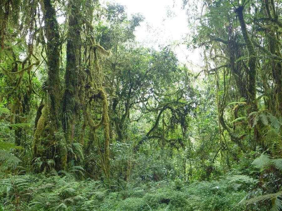 forêt luxuriante kilimandjaro