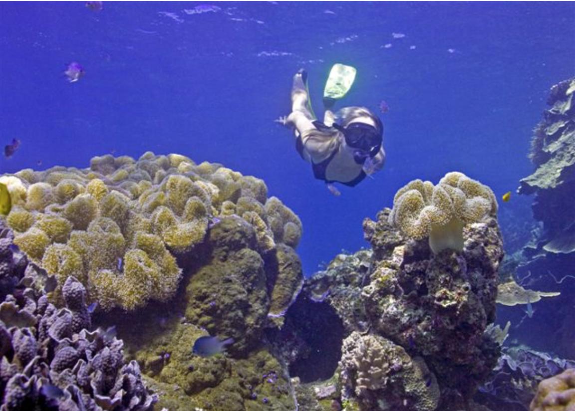 plongée Zanzibar