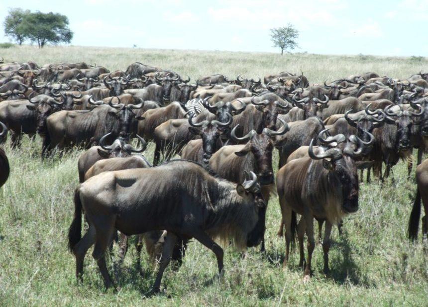 Migration Tansania
