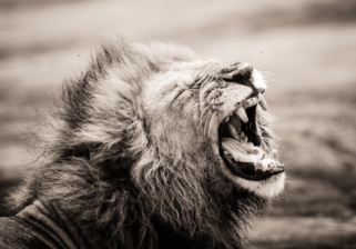 Tansania Foto-Safari