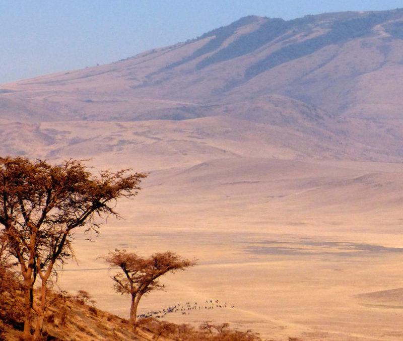 Tanzania Safari Ngorongoro